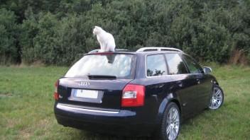 oetzie -Audi A4 Avant